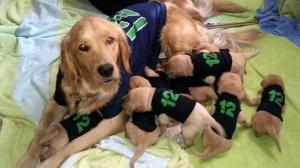12th man puppy